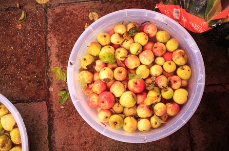 See Pictures from Apple Day